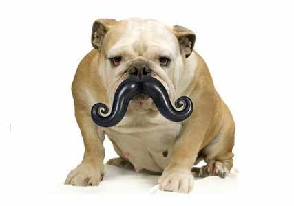 Stache Ball Dog Toy