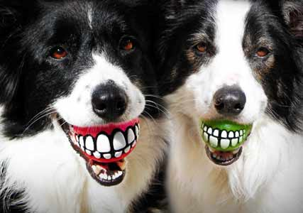 dog ball teeth