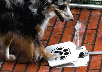 dog water dispenser