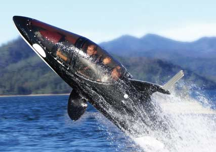 killer whale submarine